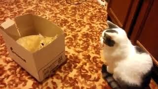 Жестокая битва котов за коробку! :).