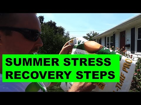 Summer Stress Recovery Step 2