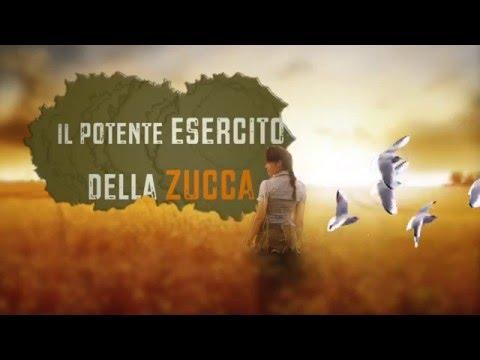 Le sorprendenti virtù dei semi di  zucca