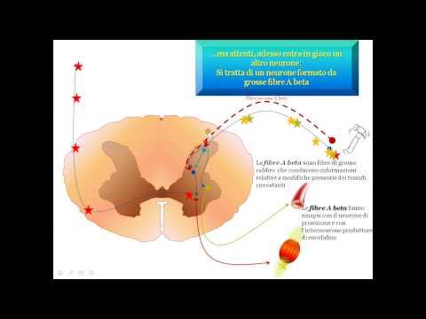 Us reni e delle articolazioni