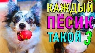КАЖДЫЙ ПЕСИК ТАКОЙ 3 | ПАРОДИЯ Magic Pets