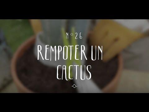 Jm tv vid os conseils en jardinage for Conseils en jardinage