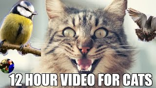 12 Hour Hypnotizing Video For Cats Version 2 - Birdsong  - Birds Driving Cats Crazy !