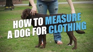 Dog Clothes Measurement (for Dog Coats, Sweaters, Shirts And More)