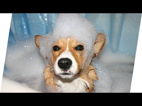 HUNDE: Warum stinken nasse Hunde? 🐶 Geniale Fakten, Tipps & Tricks