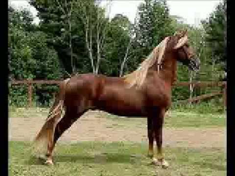 Arklių veislės