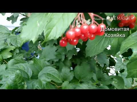 Сад в конце лета;) розы урожай яблок#ДомовитаяХозяйка
