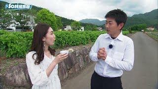 2019年5月31日放送分 SOSE編集部