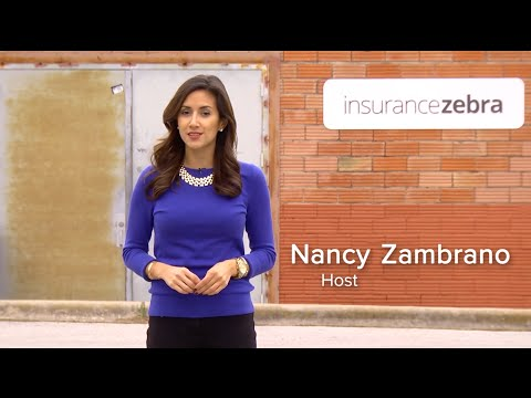 mp4 Car Insurance Zebra, download Car Insurance Zebra video klip Car Insurance Zebra