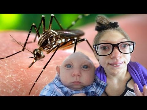 Video Top 10 Zika Virus Facts You Need To Know