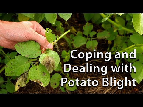 , title : 'How to Save your Potato Crop if you get Blight