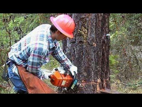 Petrol Chain Saw - Petrol Chainsaw, Tree Cutting Machine