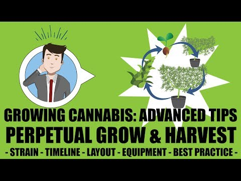Growing Cannabis 201 – Advanced Grow Tips