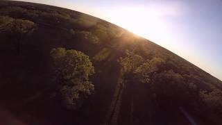 Trees - FPV Freestyle