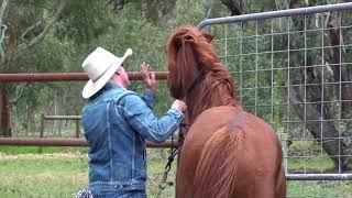 Unhandled 6 Year Old Stallion