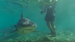 Swimming with Bull Sharks | CAUTION! | Smart Sharks | BBC Earth