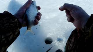 Отчеты с рыбалок харьков форум