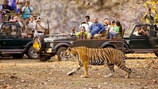 Gambar cover Jungle Safari at Jeep in The Chitwan National Park Nepal 2018. (11K)