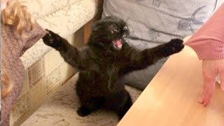 FUNNY ANIMALS: Try not to LAUGH - The FUNNIEST ANIMAL videos