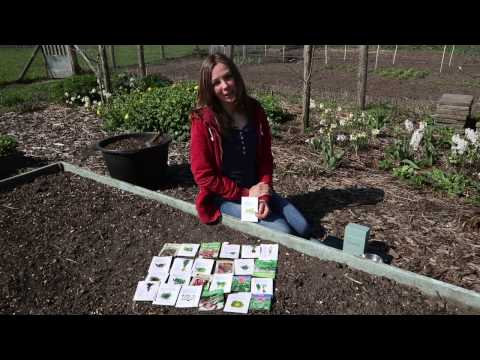 How to Grow Your Own Edible Annual Polyculture