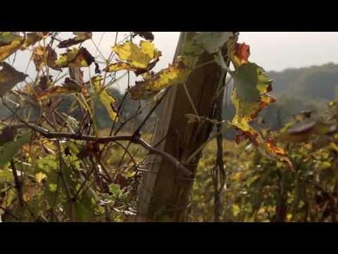 The Process of Making Armagnac - Château Arton Armagnac
