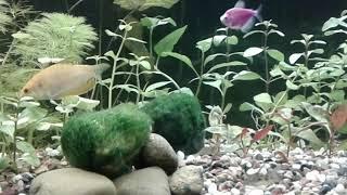 Рыбки.Поиск корма:)