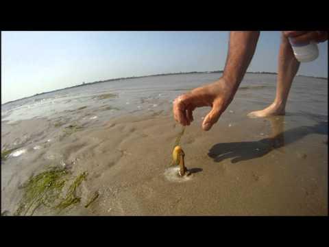 海灘捉聖子