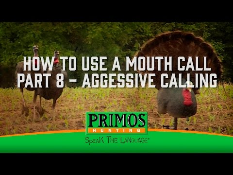 How to Use a Mouth Turkey Call Part 8 - Aggressive Yelping video thumbnail