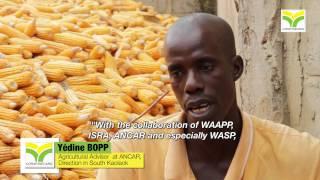 PSAO/WASP: La Voix des Producteurs de semences