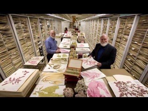 Smithsonian Digitization: Impact of Digitizing Botany Collection