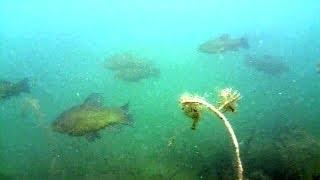 Czy łowiectwo podwodne i filmowanie ryb to łatwizna?