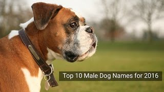 Top 10 Male Dog Names for 2016