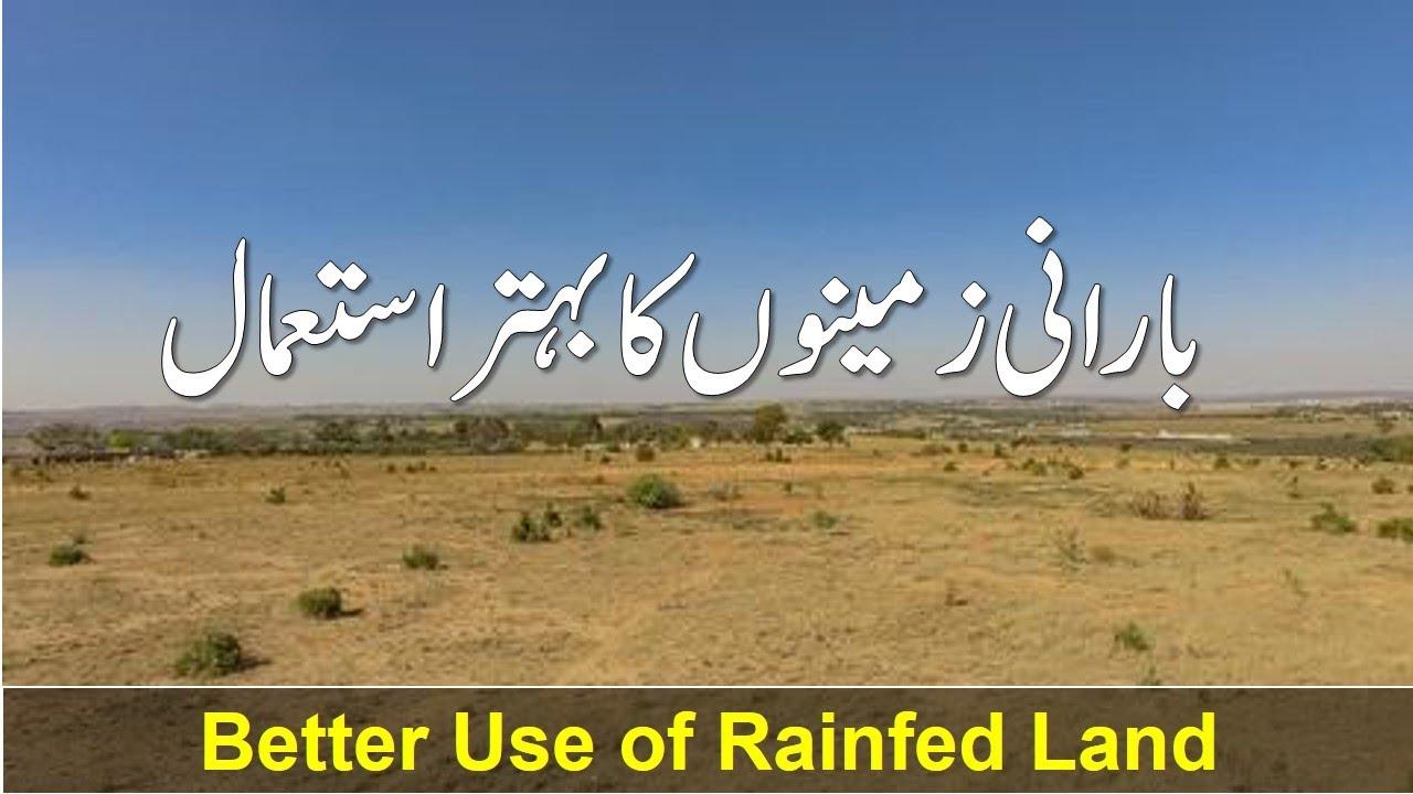 Barani Zameno ka Behter istamal - بارانی زمینوں کا بہتر استعمال - Better Use of Rainfed Land