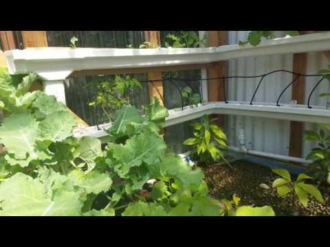 Rain 20gutter 20system On Grow Aquaponically