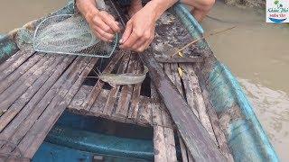 83 | Cắm Câu Mồi Dế Cá Lôi Gục Cần P2 | Fishing