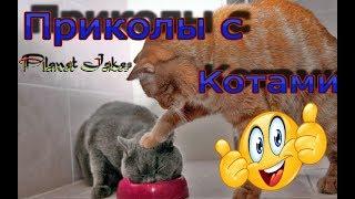 Приколы с котами.Смешные кошки видео до слез.Лучшие приколы с котами!!!!