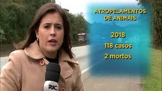 Acidentes em rodovias paranaenses com animais dobram durante segundo semestre de 2018