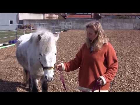 Pferdehof Steinhauser - anlegen des Lama Lead oder TTEAM Führkette