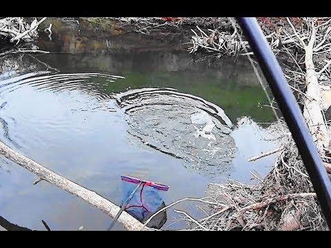 Fiume Kostroma che pesca nellestate