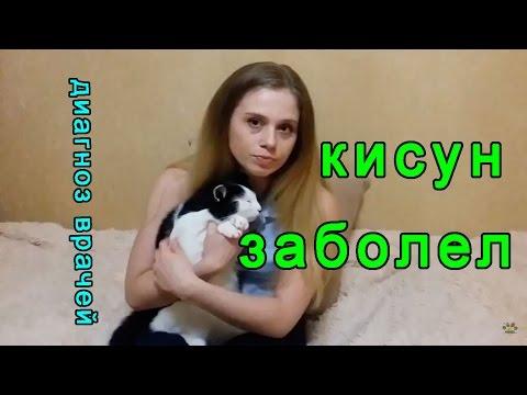 Кот заболел | Цистит у кота кастрированного: симптомы