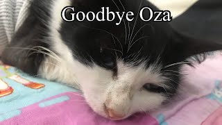 Help A Cat Diagnosed With Cancer. Episode 3. End Of The Story