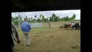 preview picture of video 'el vaquero'