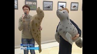 На Куршской косе отметили День тюленя