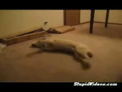 Der träumende Hund