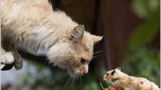 Приколы с кошками Смешные животные