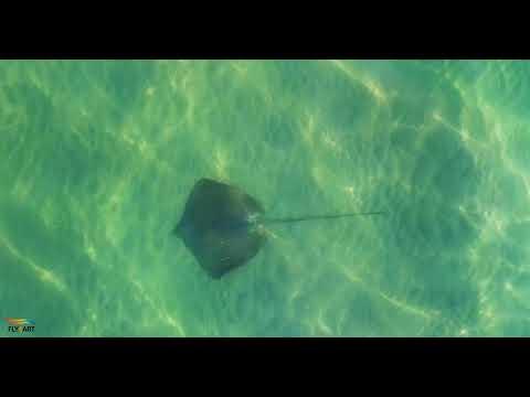 תיעוד ראשון: כרישים בתחנת הכוח חדרה
