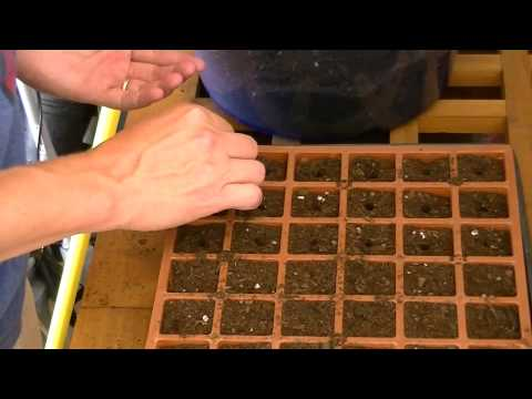 , title : 'How to Grow Cabbage from Seed
