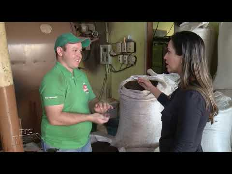 Café produzido em Mandaguari é referência em qualidade