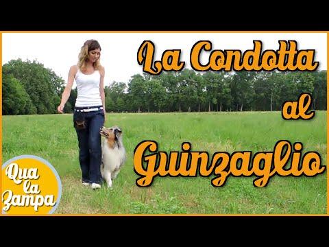 Cane che tira al guinzaglio: la CONDOTTA - Addestramento Educazione cani n° 7 | Qua la Zampa