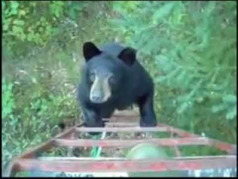How Canadians scare off bears